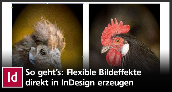 So erzeugen Sie flexible Bildeffekte direkt in InDesign
